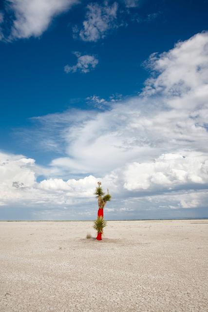Yuca roja I-Chihuahuan Desert.jpg