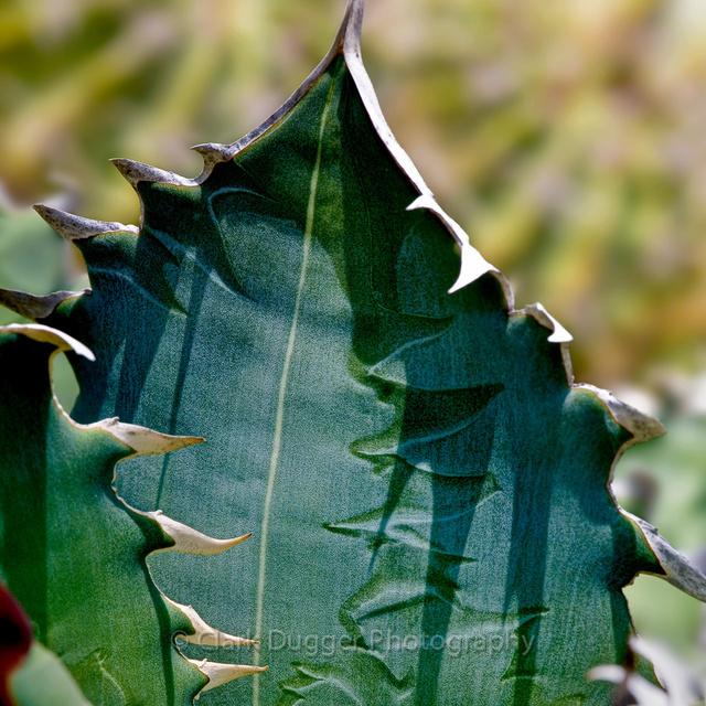 Thorns_3_SQ.jpg