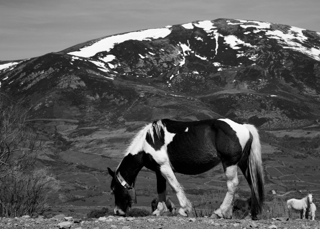 viewbook mountain horse 741af64220776f79d9701f881ae609a1_large.jpg