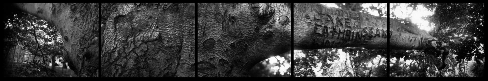Branch8-7-98 copy.jpg