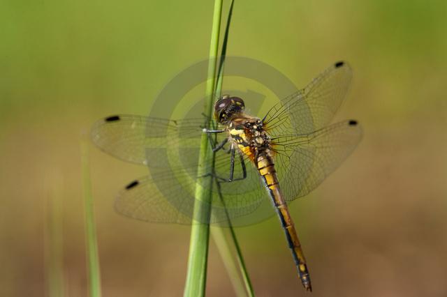 Insekten_Copyright_394.jpg