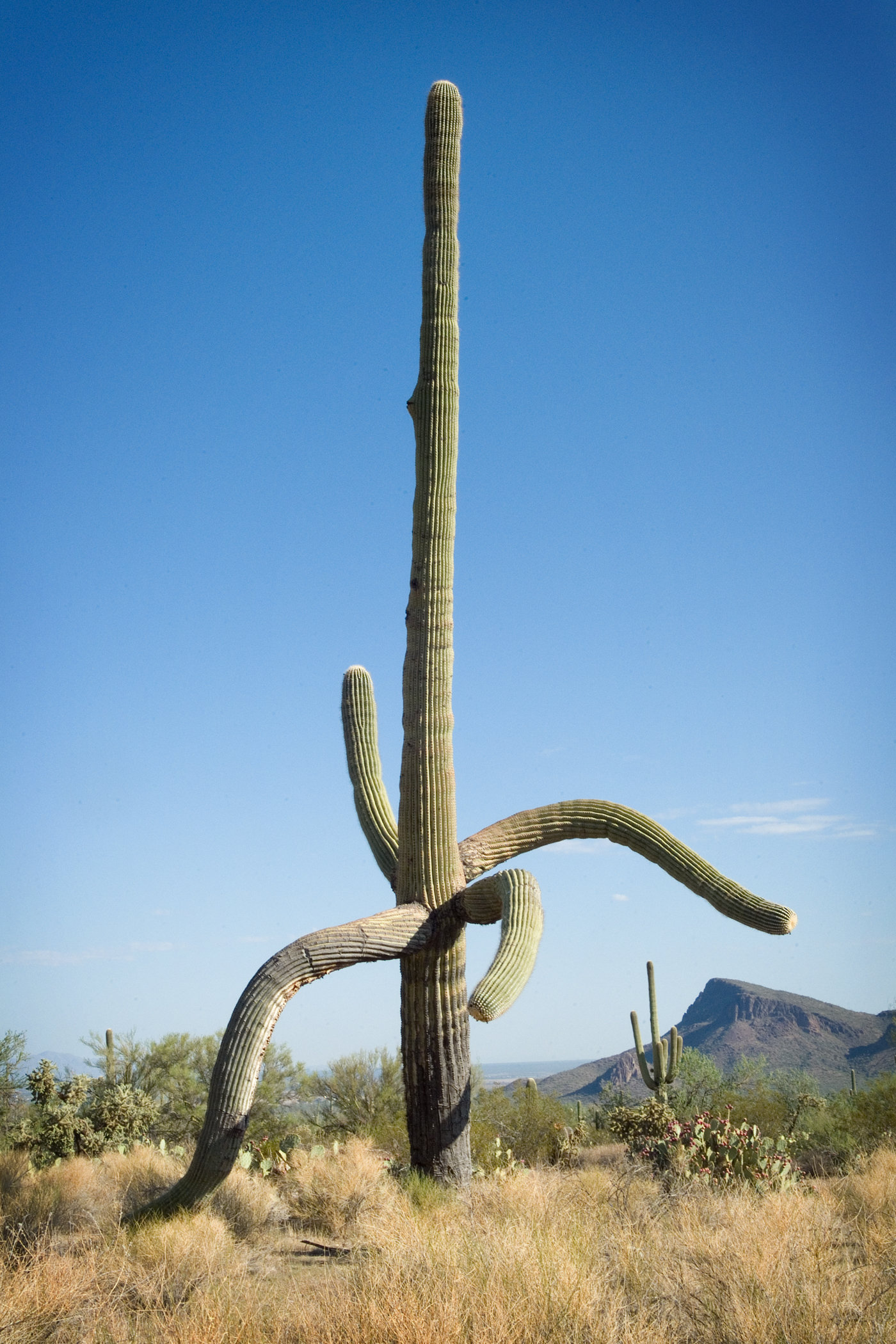 Saguaro West III