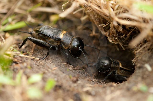 Insekten_Copyright_339.jpg
