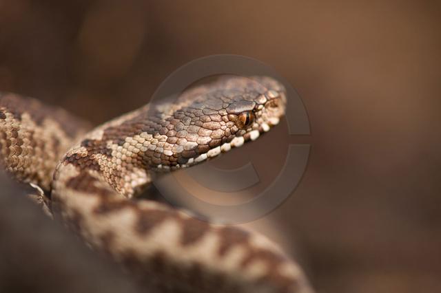 Reptilien_Copyright_325.jpg