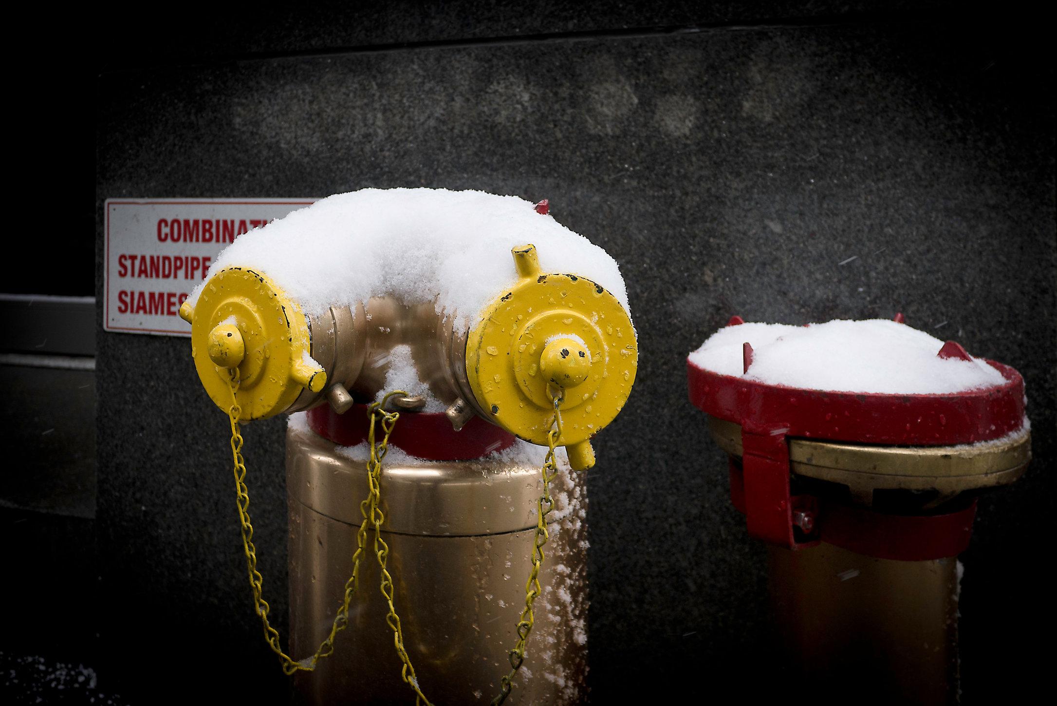 Siamese in Snow, NY