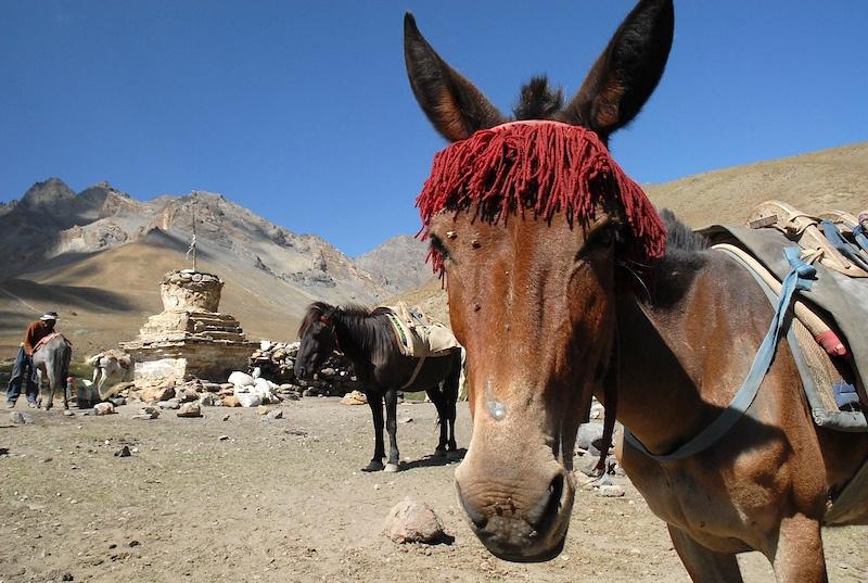 Ladakh_25.jpg