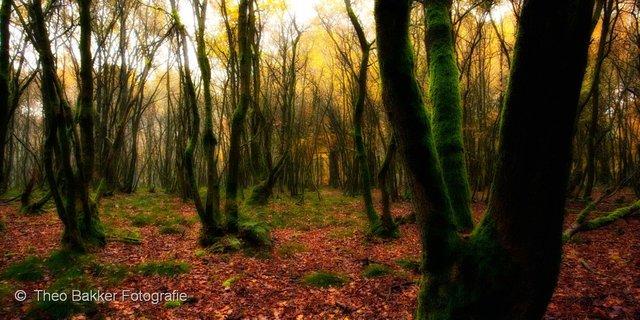 2010-346_009-Edit-Edit.jpg