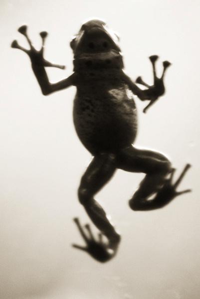 RGB_AQUATICS_azure_dart_frog_37574-43rF1.jpg