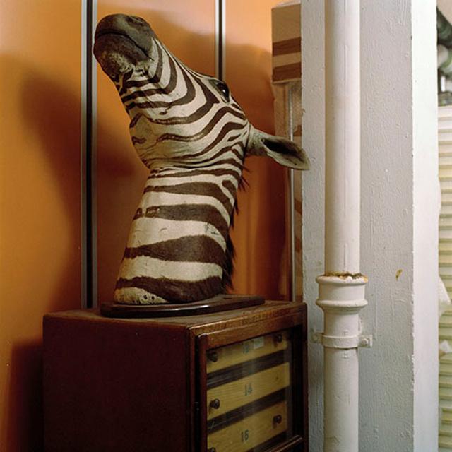 MuseumZebralow.jpg