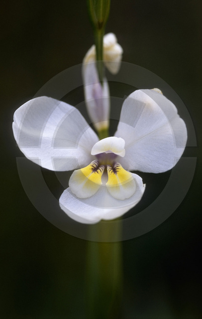 Pflanzen_Copyright_058.jpg