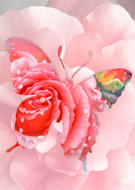 Butterfly-05 (1).jpg