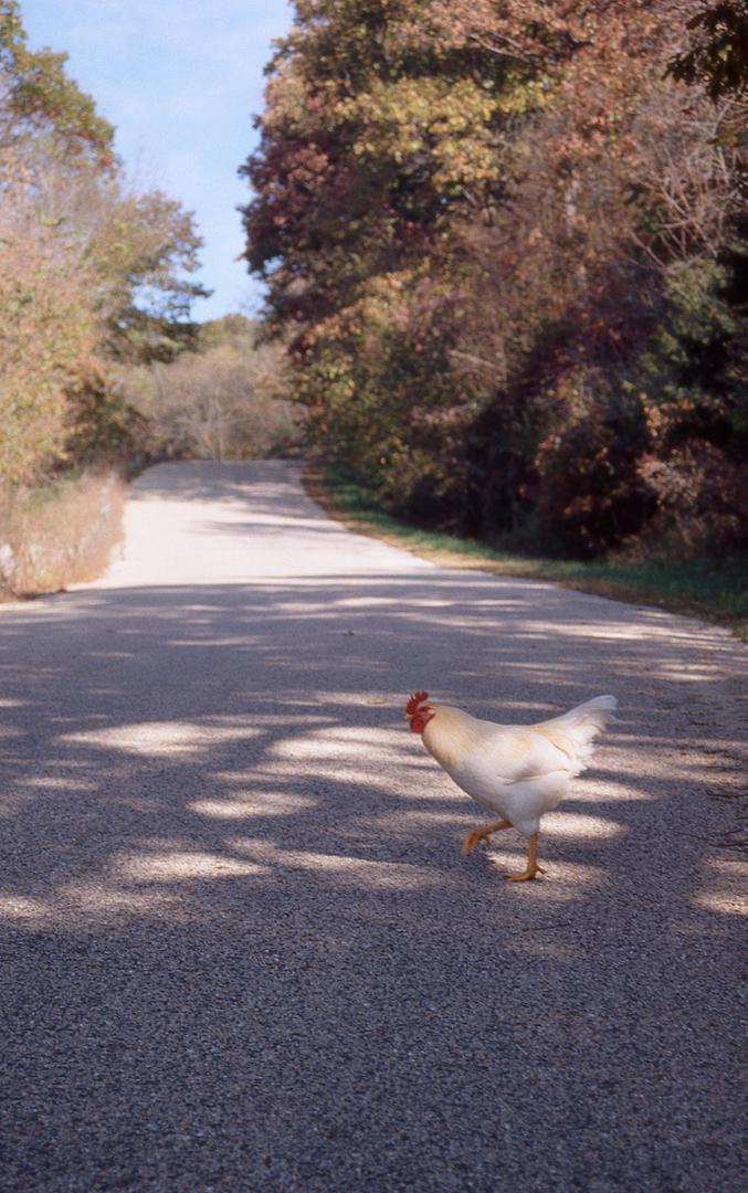 chicken-48bit-final.jpg
