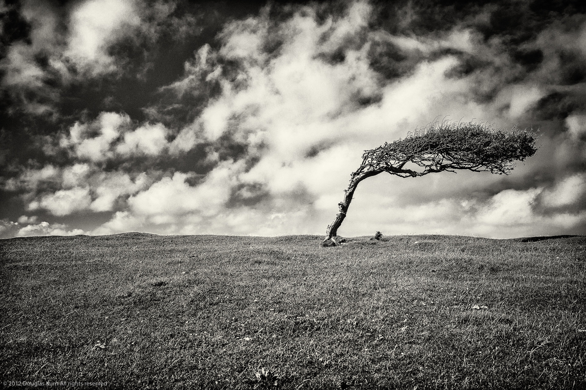 Beachy Head Tree
