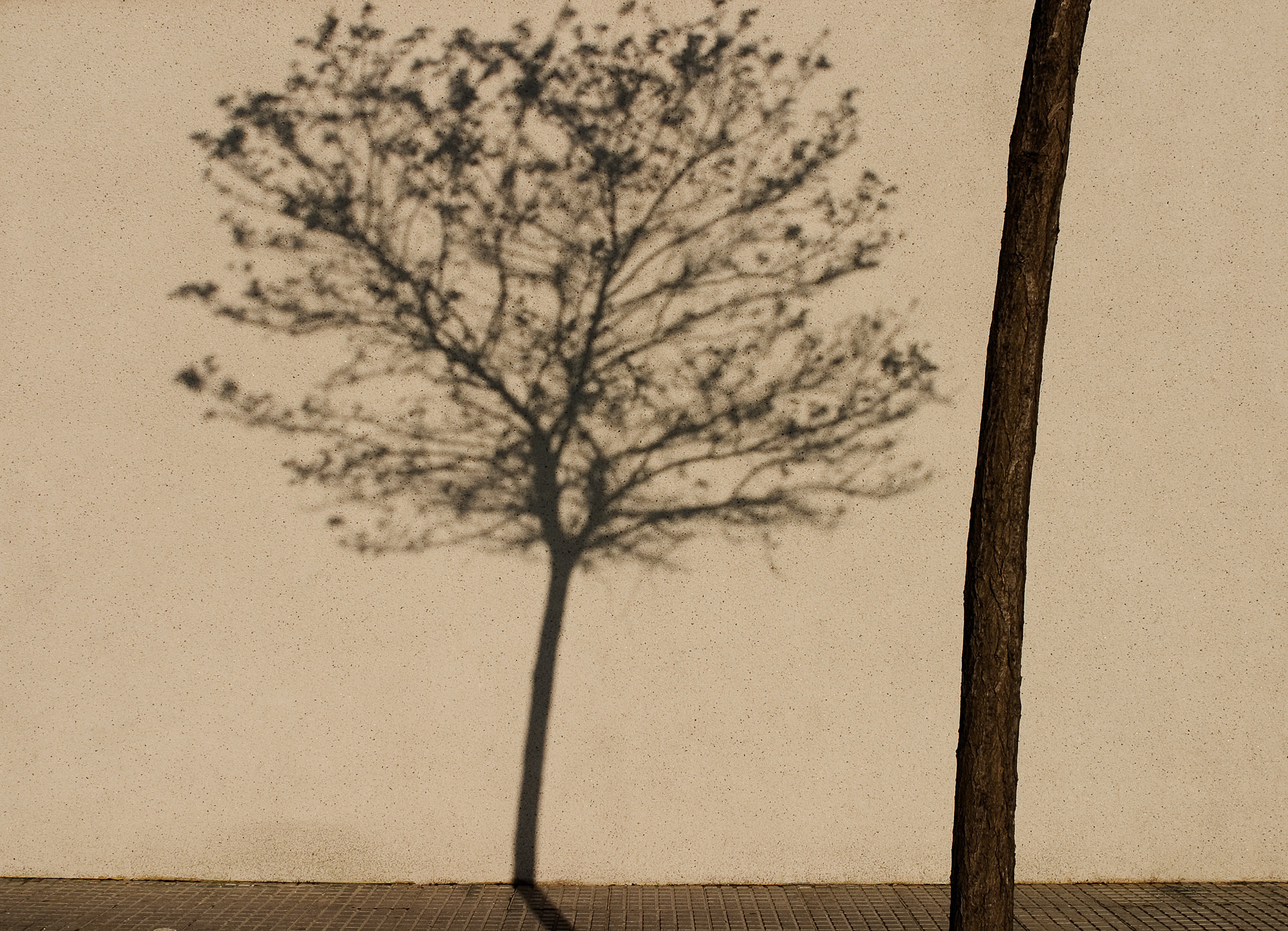 Tree Shadow, Jerez