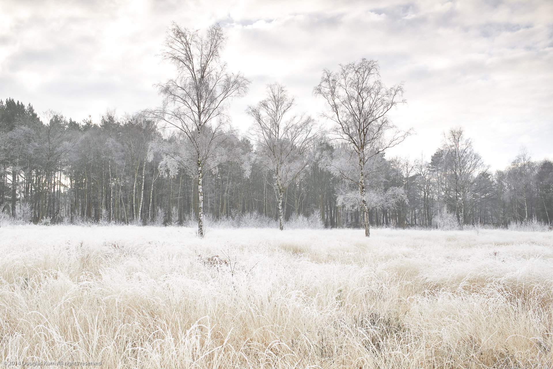 Horsell Frost 2