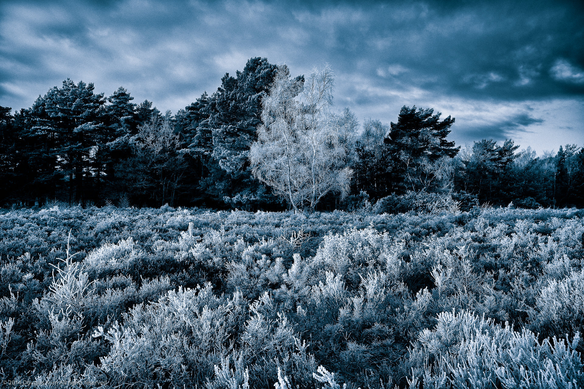Horsell Frost 3