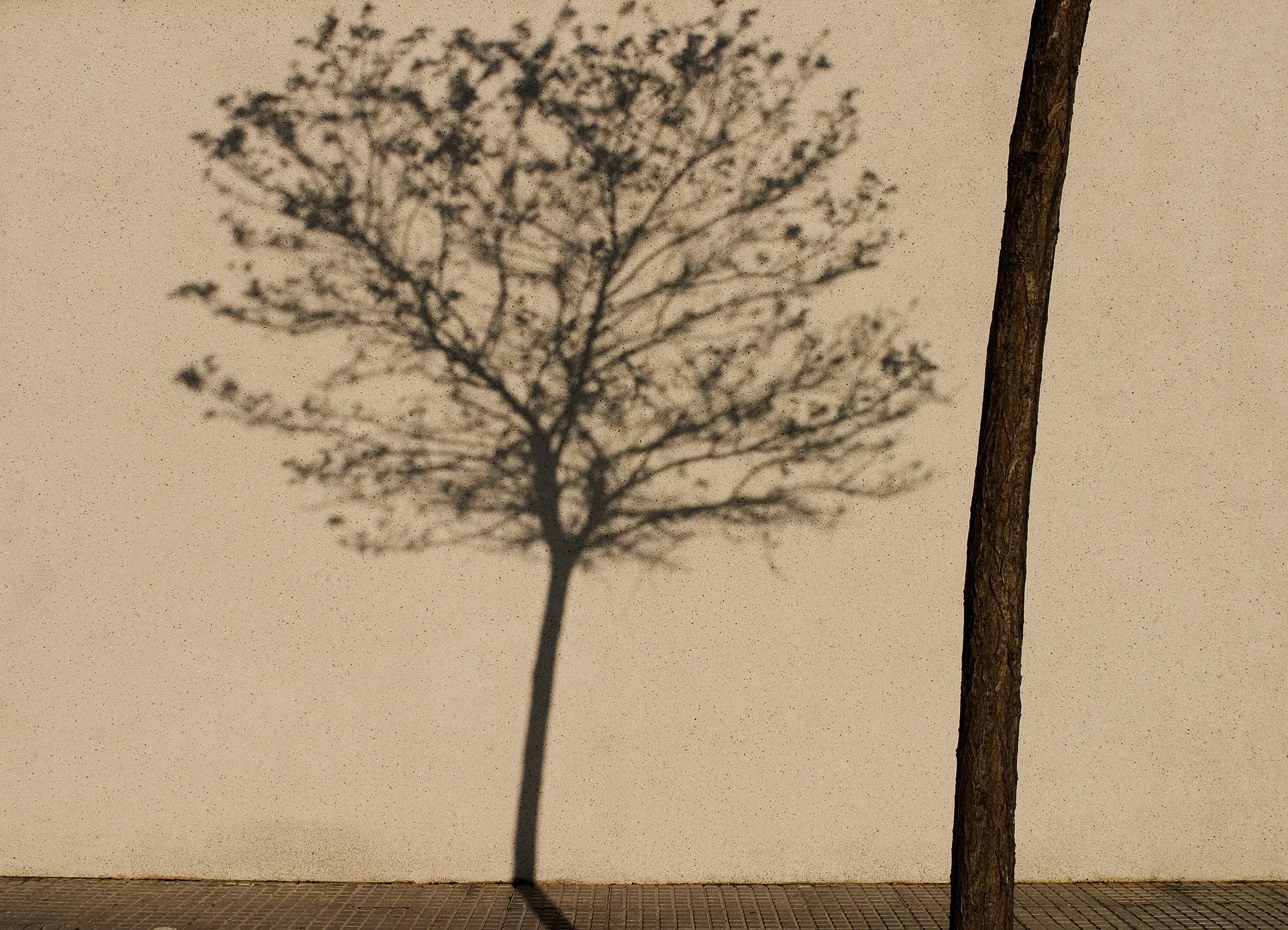 Tree Shadow, Jerez