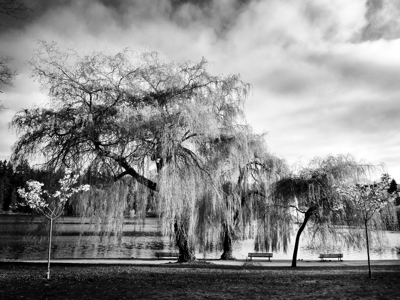 Tree-bw60.jpg