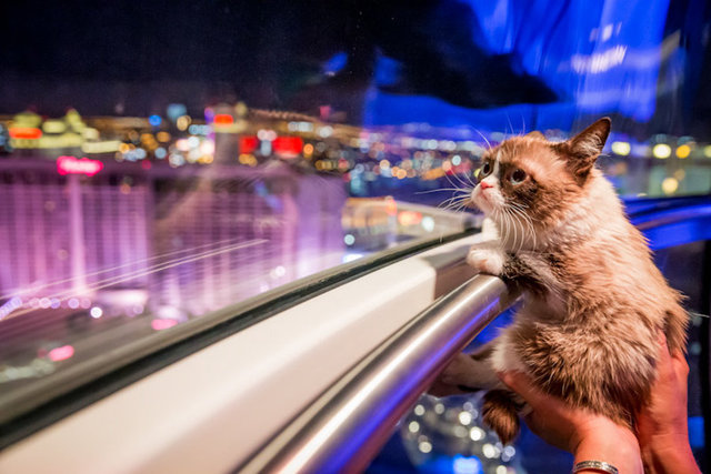 8_5_14_grumpy_cat_kabik-323.jpg