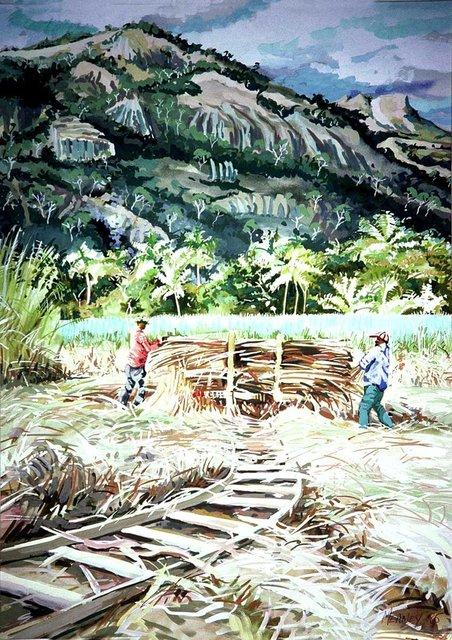 HARVESTING SUGAR CANE, LAUTOKA, FIJI