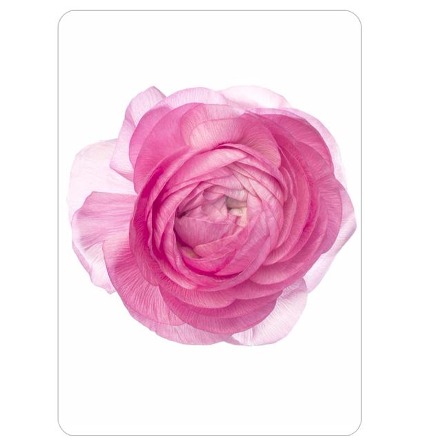 Pink NC10 Postcard / Notecard