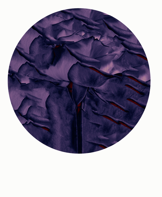 Pantone Violette Circle Rose