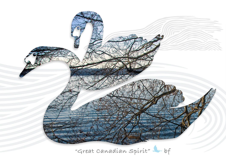 swan-01_1.jpg