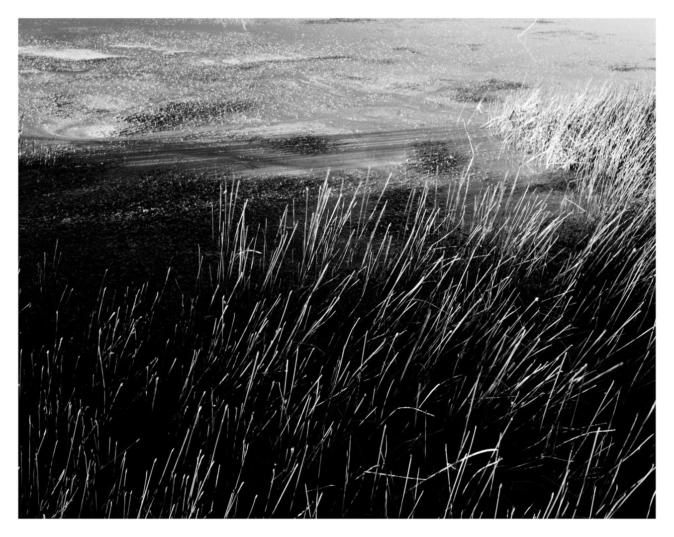 Reeds and Mary, Flagstaff, Arizona, 2011.jpg