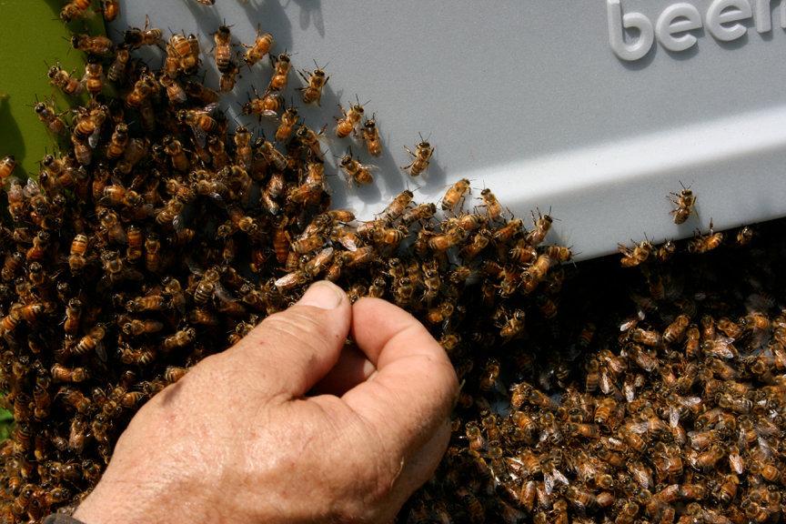 BeesHand2.jpg