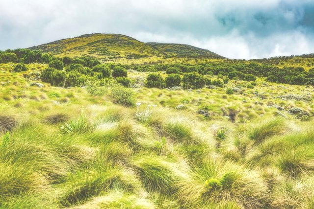Mount Kinangop, Kenya