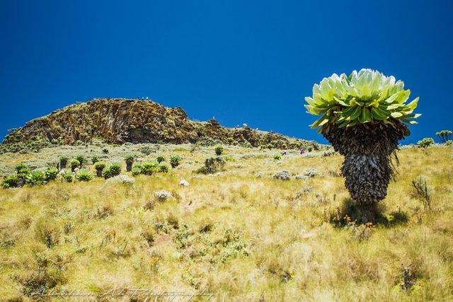 Abraham Ali Table mountain-6859.jpg