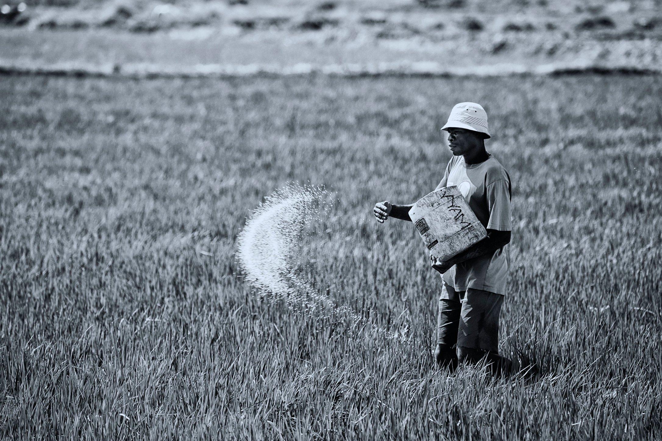 Fertilizer day Kano Kenya by Abraham Ali