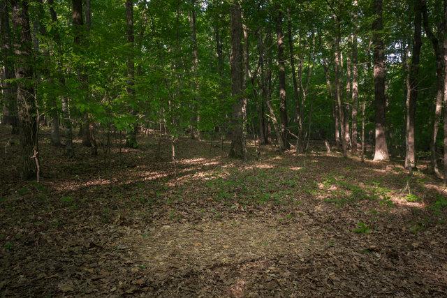 Tent Footprint, New Hope, North Carolina