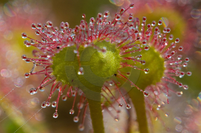 Pflanzen_Copyright_371.jpg