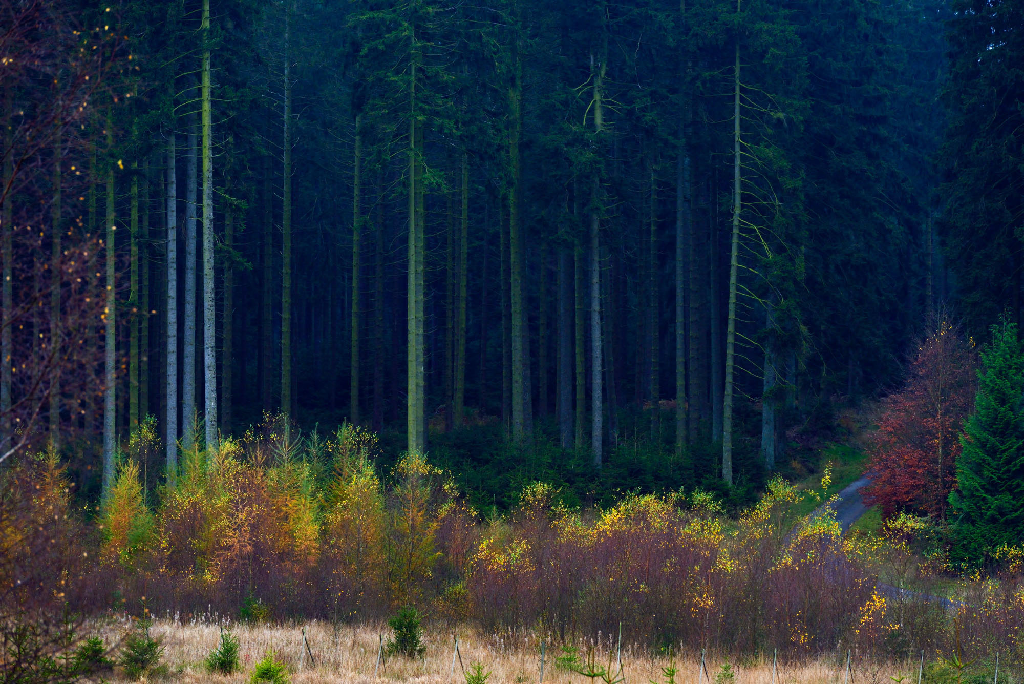 Ardennes # 10