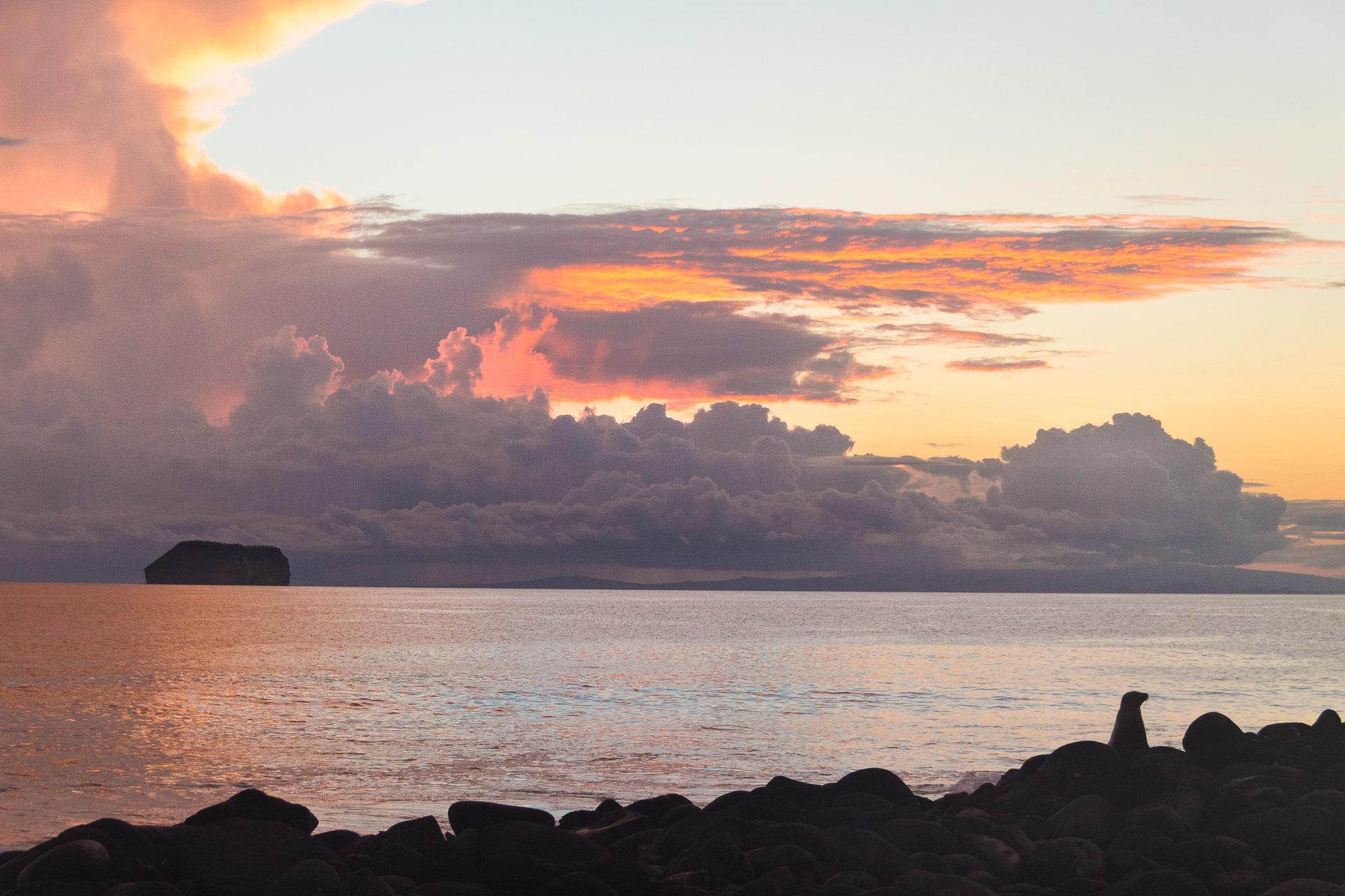 150418_Galapagos-1126.jpg