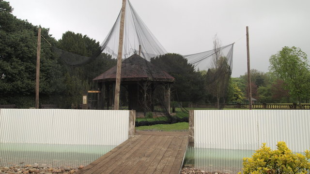 Trench & Aviary.JPG