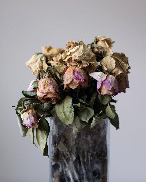 dead_flowers.jpg