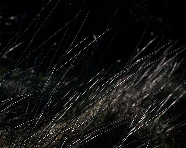 Sun Reedsweb.tif
