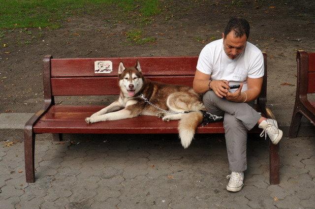 Yurko Dyachyshyn_(Benches)_249_resize.JPG