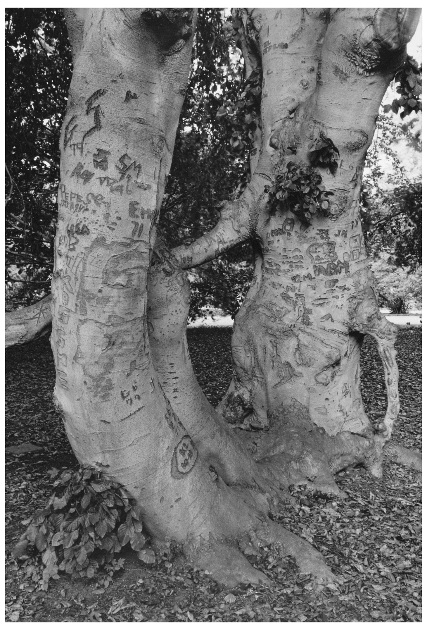 Trees  27.jpg