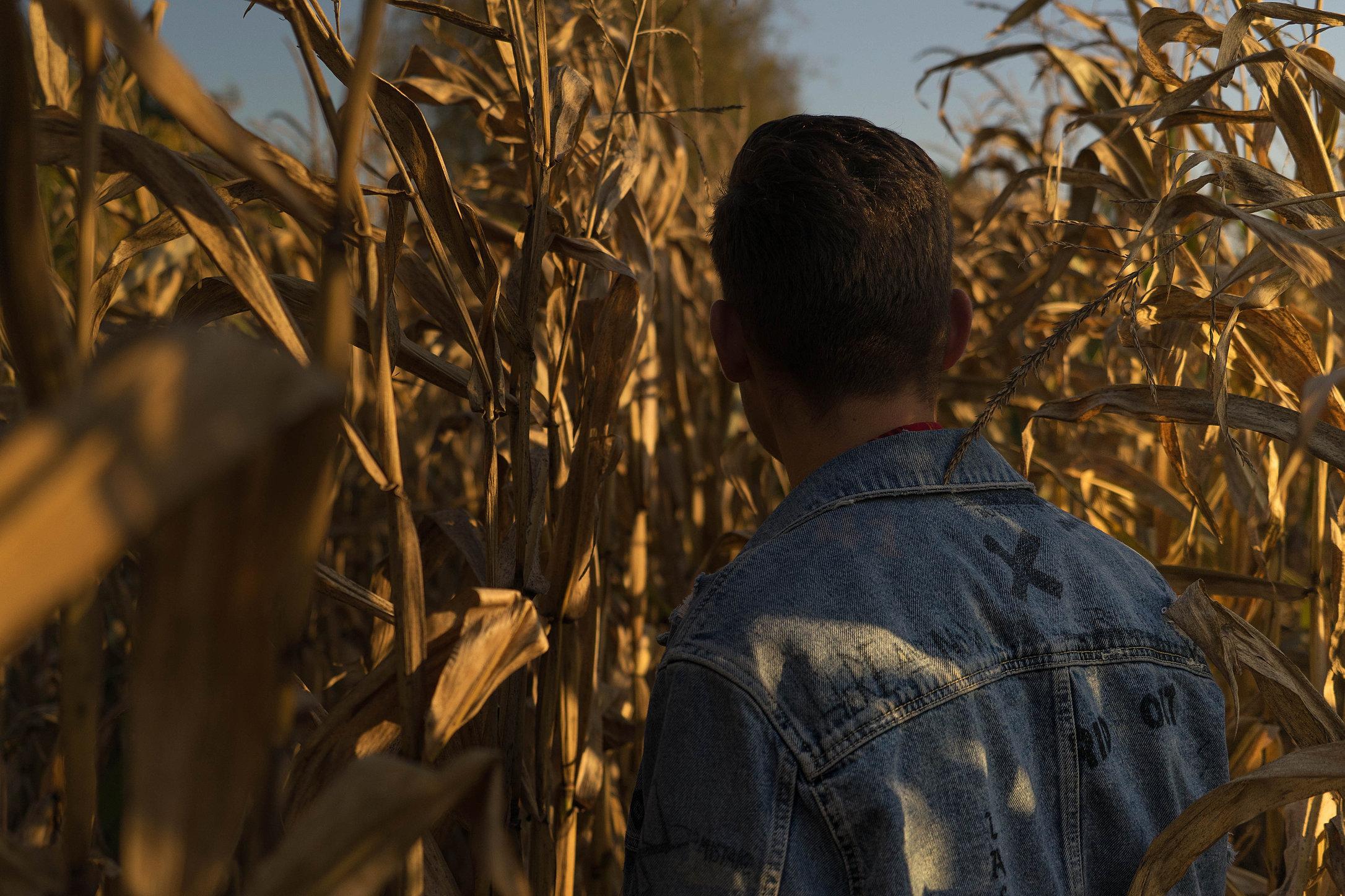 corn28 (1 van 1)kopie.jpg