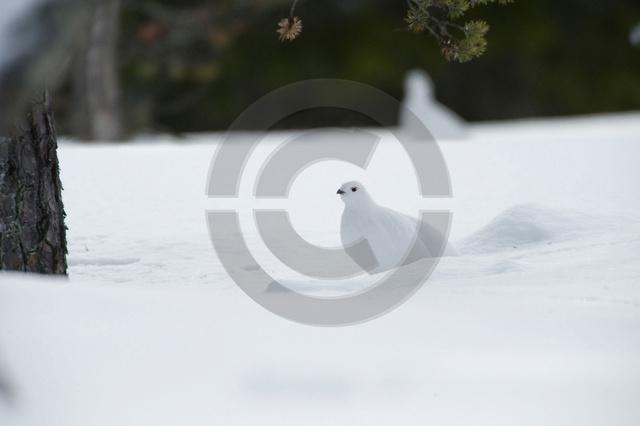 Tiere-Vögel-23.jpg