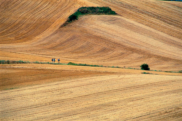Champ de blé en Rioja-567