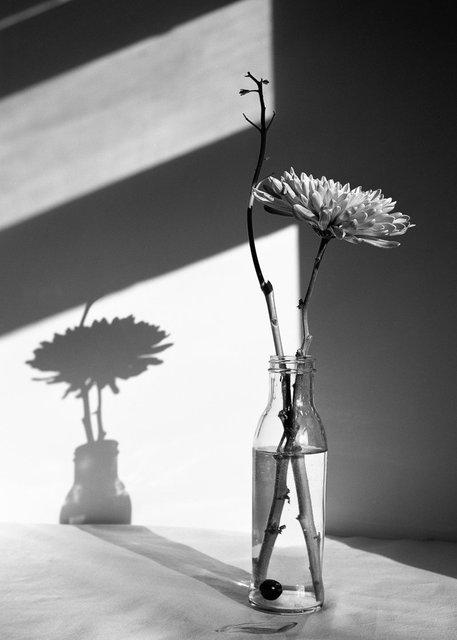 Flowers147.jpg