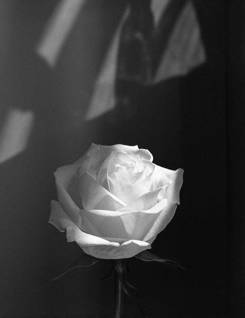 Flowers158.jpg