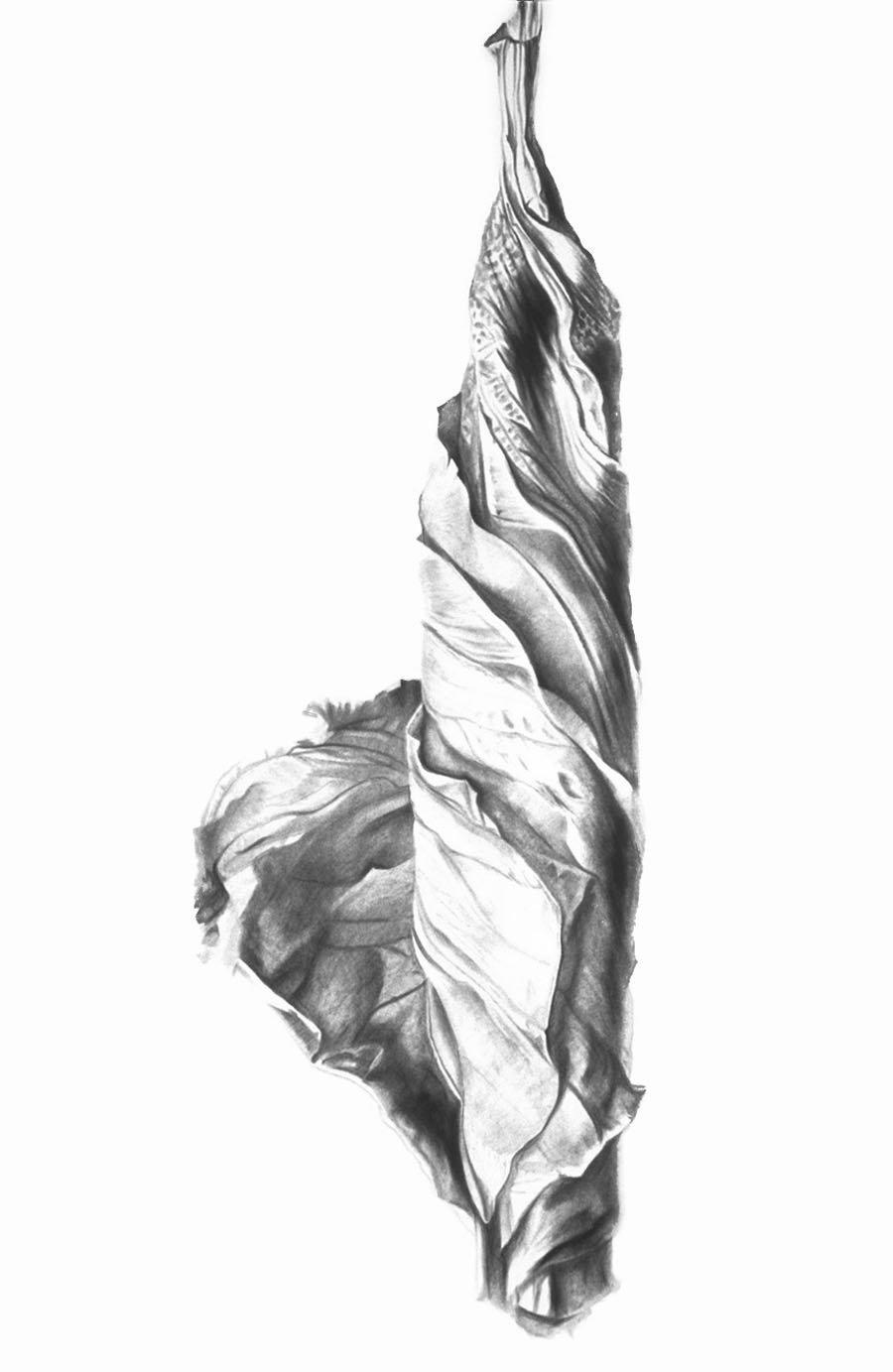Hibiscus Solitude
