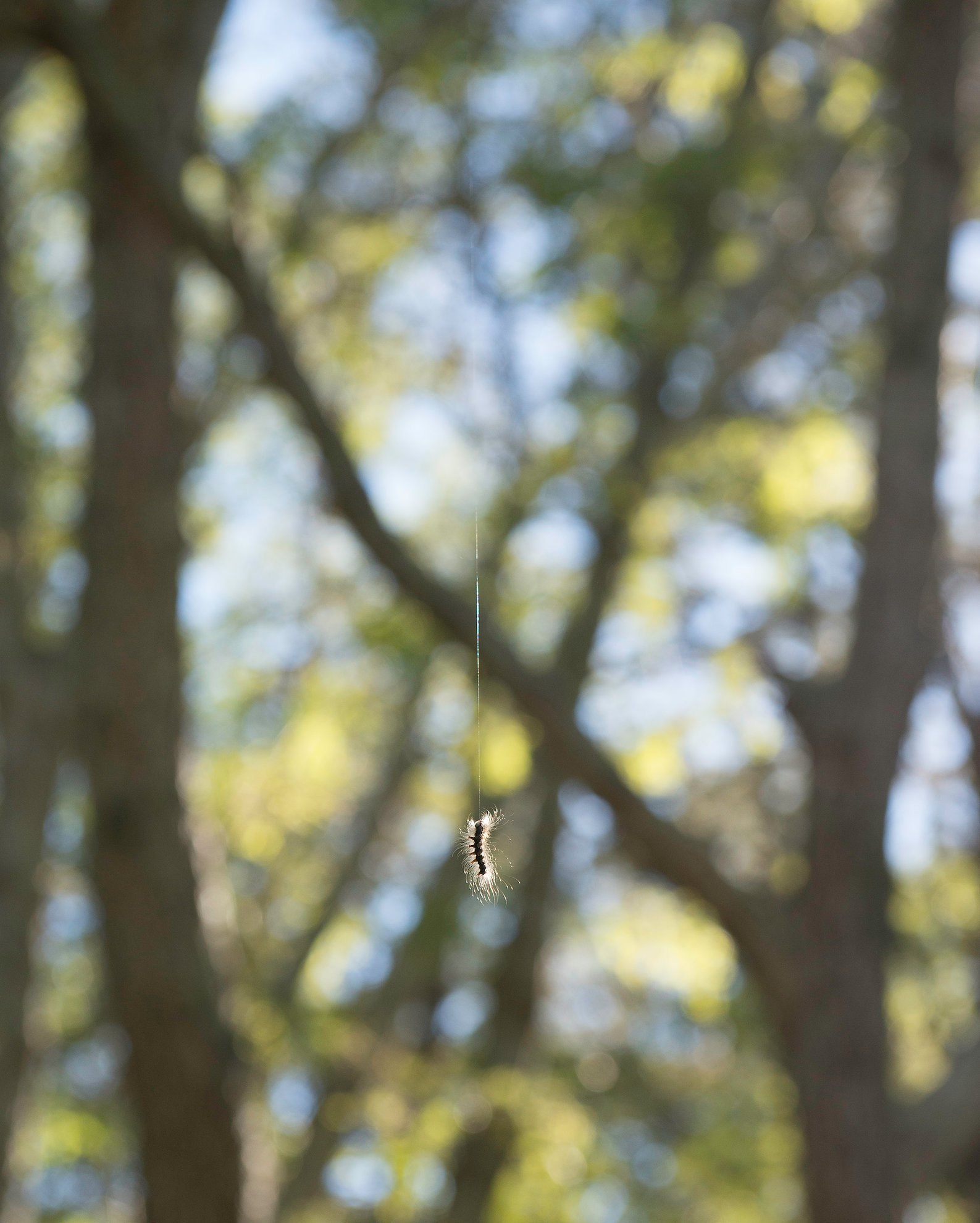 untitled (hanging - caterpillar)