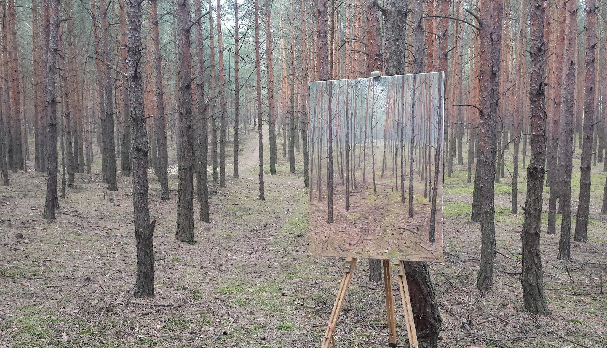 Las z Radomyśla nad Sanem