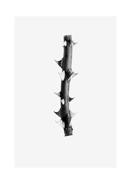 Thorn .jpg